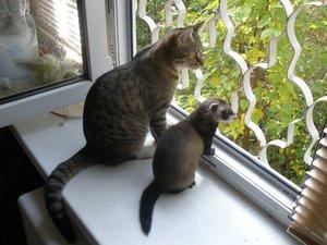 Самые интересные животные-кошки