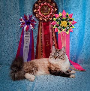 Кошки уход и содержание в домашних условиях