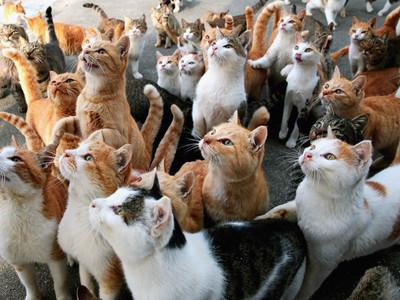 Гликопин для кошек и собак инструкция
