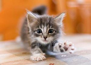 Причины, по которым котенок кусается