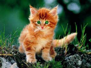 Можно назвать котенка в соответствии с вашими ассоциациями