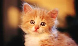 Имя для котенка должно приятно звучать и не вызывать негативных эмоций