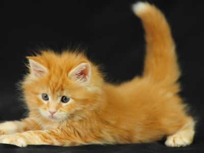 Как лучше назвать рыжего котенка мальчика