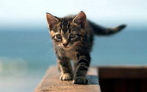 Советы как назвать котят