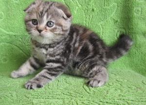 Как красиво назвать котенка