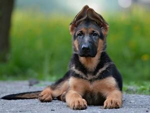Как начать обучение щенка