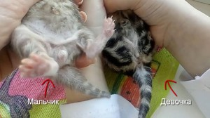 Как выглядит новорожденный котенок