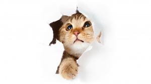 Как наказать кота за испорченную мебель