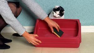 Как приучить котов гадить в туалете