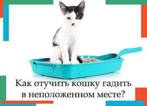 Как отучить котов гадить