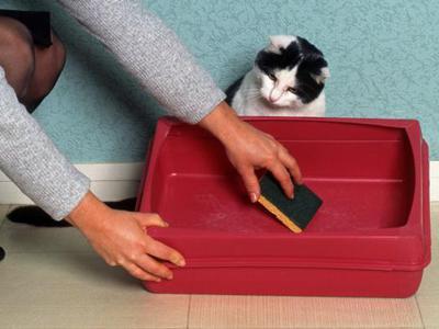 Как отучить кота гадить в неположенном месте легко и быстро