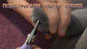 Подстригаем когти кошке