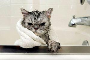 Купание кошки в домашних условиях