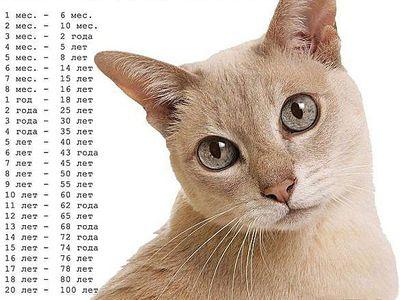 Как правильно определять возраст кота или кошки