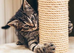 Как следует приучать котенка к когтеточке фото