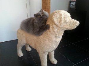 Кот лежит на своей когтеточке