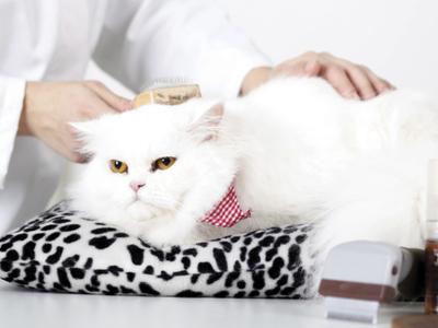 Как ухаживать за домашней кошкой