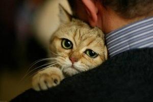 Нормальная температура и болезни кошек