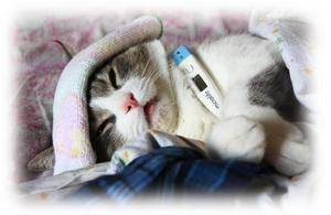 Нормальная температура у котят несколько выше, чем у взрослых животных