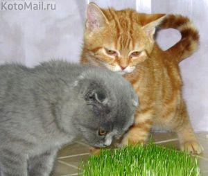 Котята кушают травку
