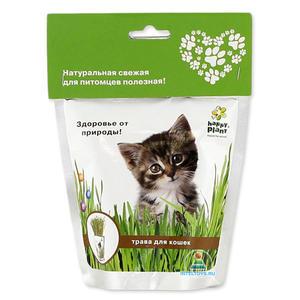 Выращиваем травку для кошек