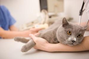Как лечить кальцивироз