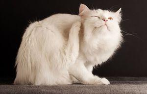 Капли для котов от внешних паразитов