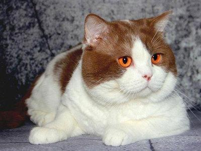 Клички для питомцев: как назвать кота