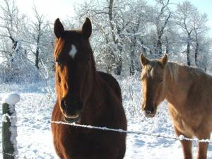 Какое имя дать лошади