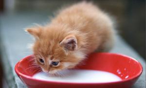 Возрастные аспекты стола котенка