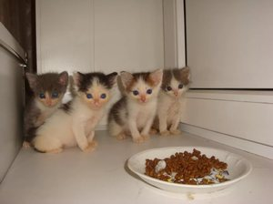 Как обучить котёнка питаться самостоятельно