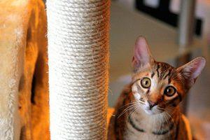Стоимость кота