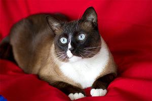 Описание внешности кошек