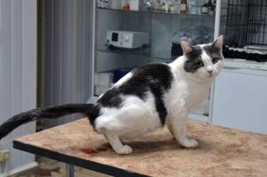 Уроцистит у кошки - первая помощь