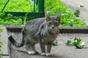 Как проявляется лейкоз у кошек
