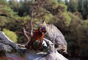 Рацион дикой кошки