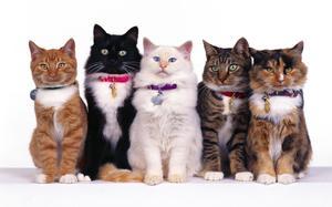 Максидин для кошек инструкция по применению
