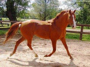 Коричневая лошадка