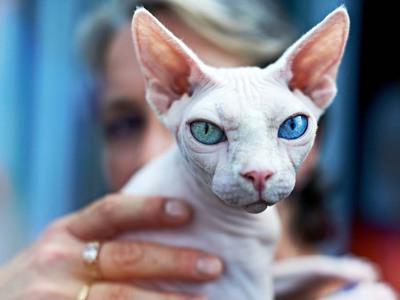 Названия самых популярных пород кошек и их фотографии