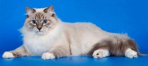 Какие отличительные черты у кошки