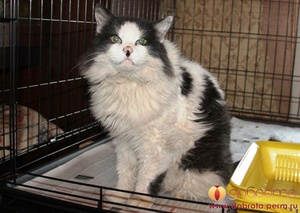 Симптомы панкреатита у кошек
