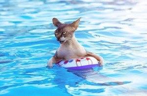 Коты боятся воды: причины
