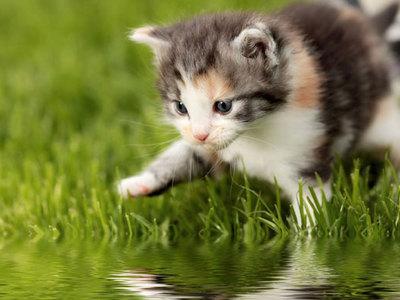 Почему кошки боятся воды: основные причины и как с этим бороться