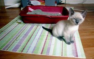 Как лечить понос и рвоту у котенка