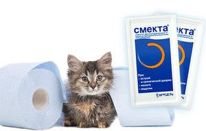 Лечение котенка от поноса