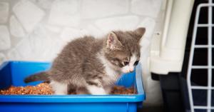Как лечить котенка от поноса