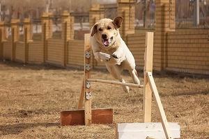Как правильно воспитывать щенка в домашних условиях