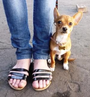 Воспитание щенка – важный процесс