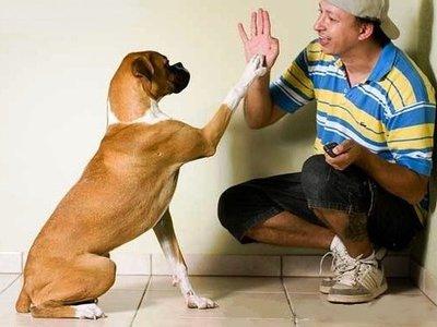 Правильная дрессировка собаки в домашних условиях