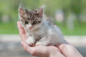 Уличный котенок на руках